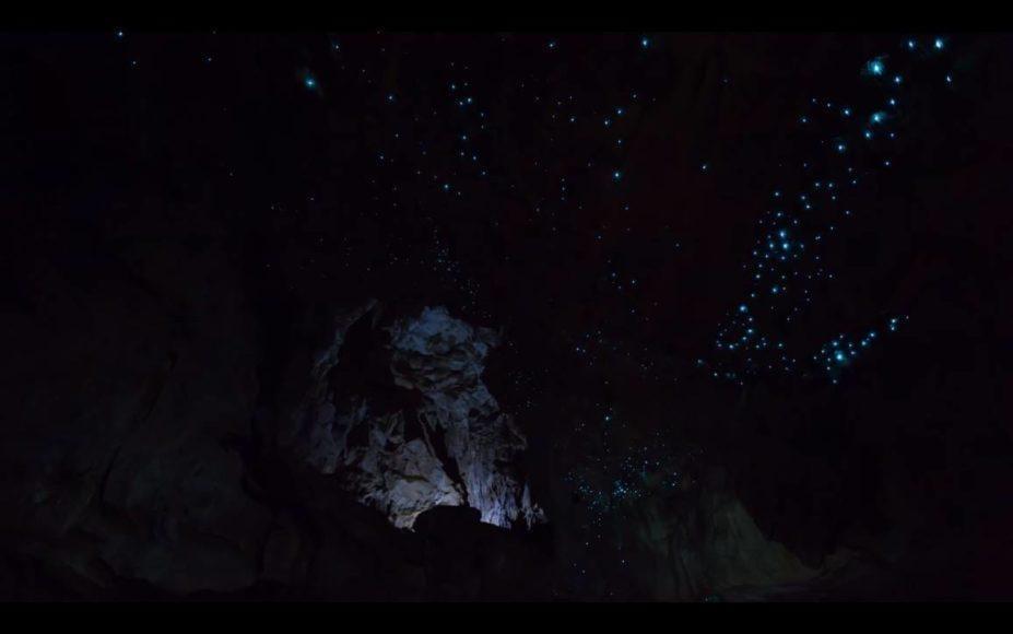 video di lombrichi luminescenti in 4K