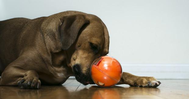 palla Geek per cani