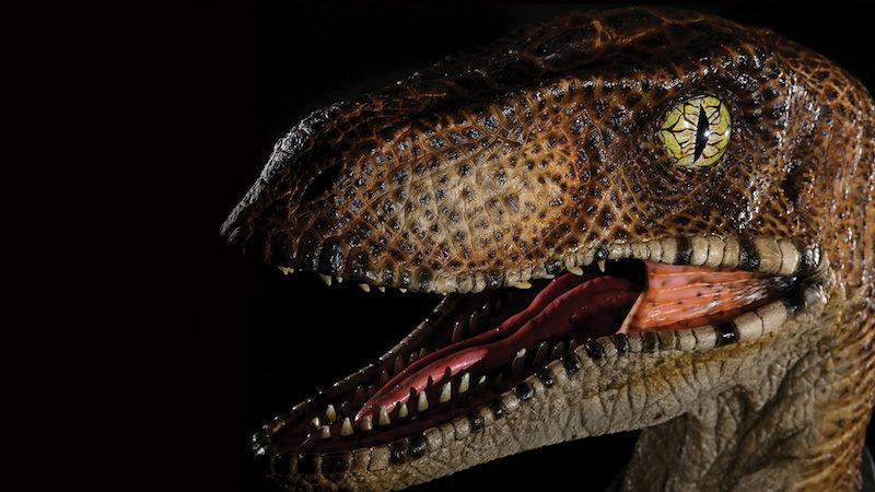 testa di un Velociraptor di Jurassic Park