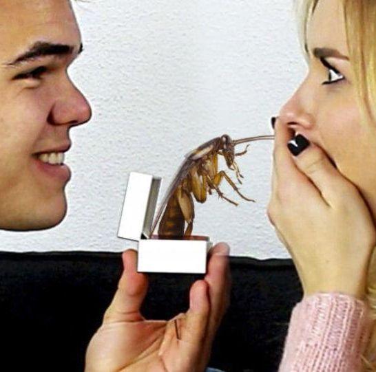 san valentino nome ex a scarafaggio