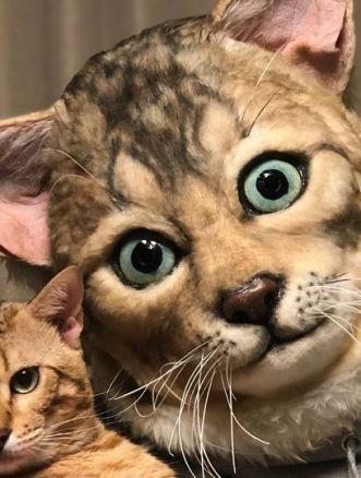 Maschera del nostro gatto