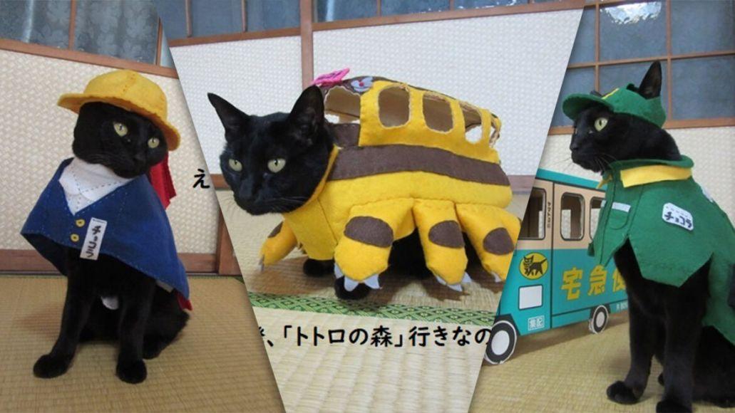 gatto cosplay