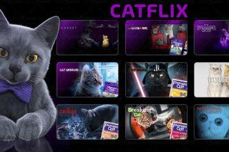 catflix parodia netflix champion cat