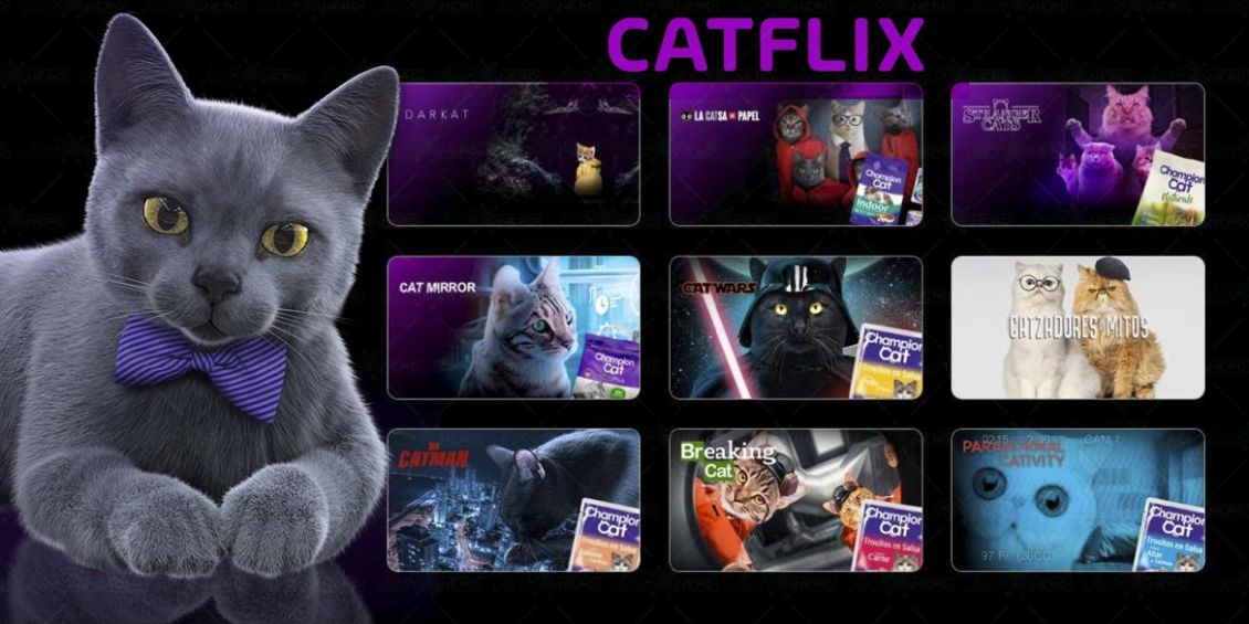 catflix parodia netflix champion cat