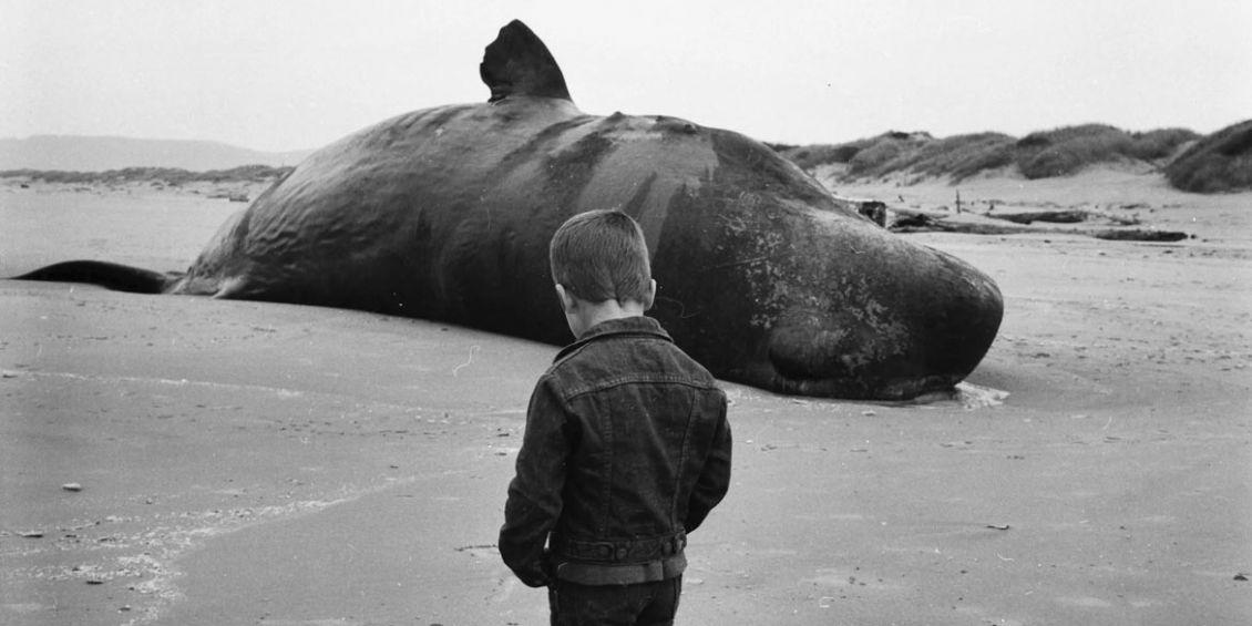 balena esplosa oregon 1970